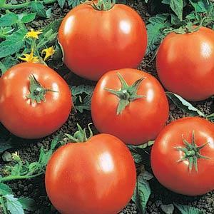 Tomato Ball's Beefsteak