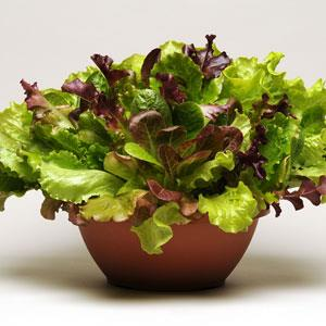 Lettuce Summer Picnic SimplySalad Mix