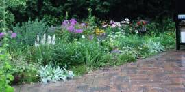 All Season Colour With Perennials