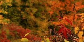 Fall Perennials